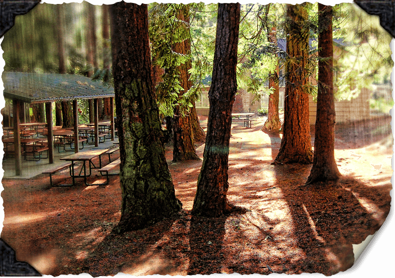 The Firs Picnic Area and Trees