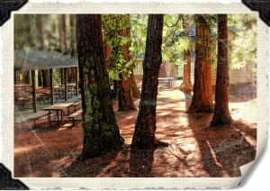 The Firs covered Picnic area
